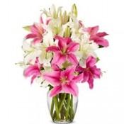 wonders of Lilies
