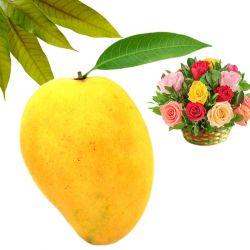 Ugadi Mango