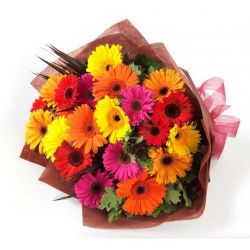 24 Mixed Gerberas Bunch