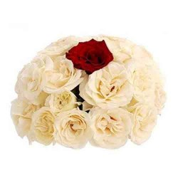25 Roses Bunch