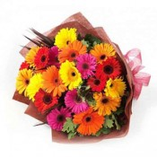 Colourful Gerberas