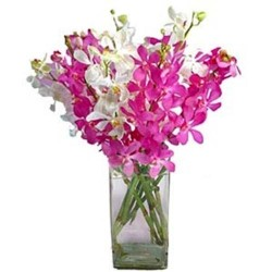 Exclusive Orchids