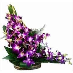 Ravishing Orchids