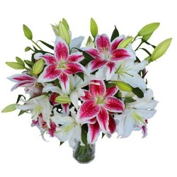 Sweet Lillies
