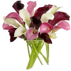 Glory of Lilies