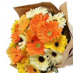 15 Mixed Gerberas