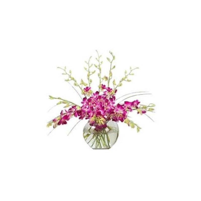 12 Orchid Vase Orchids Vase Delivery At Low Price In Goa Buy