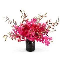 18 Orchid Vase