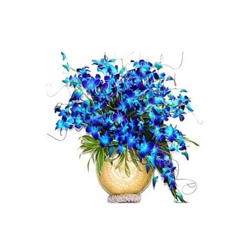 24 Orchid Vase