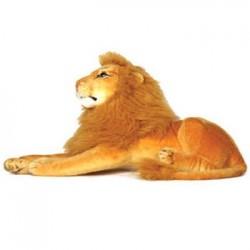 Chunmun Lion looks real -...